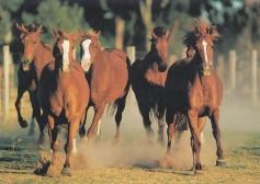 Konji-horde_0001