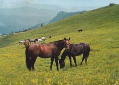 Konji-horde_0002