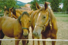 Konji-horde_0005