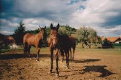 Konji-horde_0007