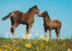 Konji-pari_0005