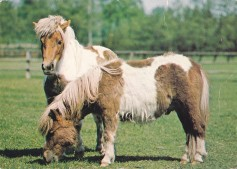 Konji-pari_0008